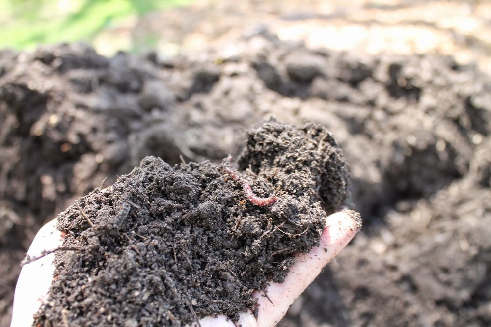 Best Soil Mix 3.jpg