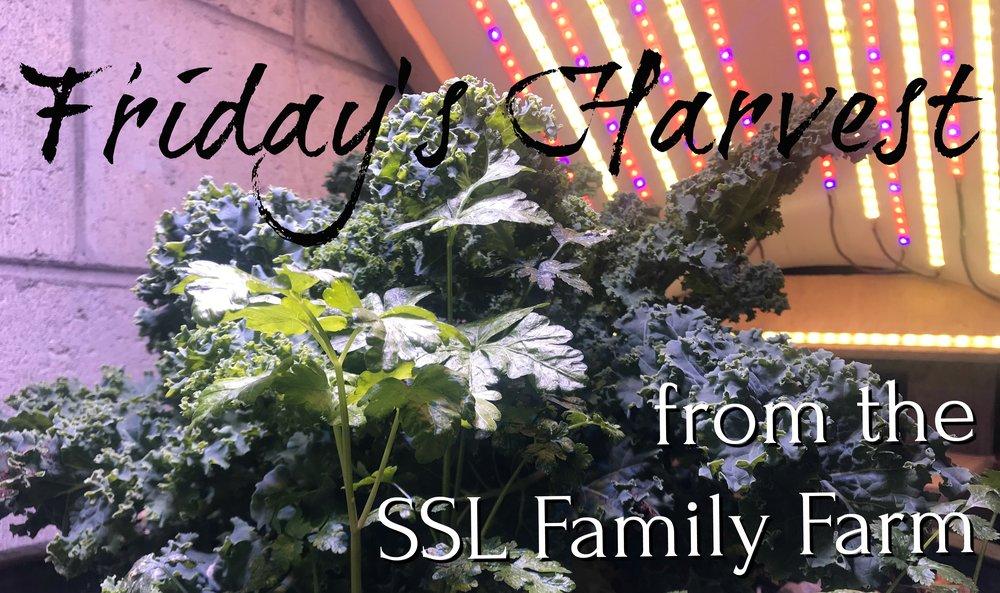 Fridays Harvest 050418.jpg