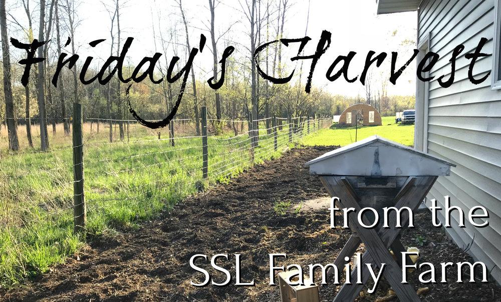 Fridays Harvest 051118 Thumbnail.jpg