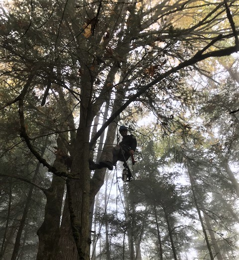 Sean tait pruning dead limbs