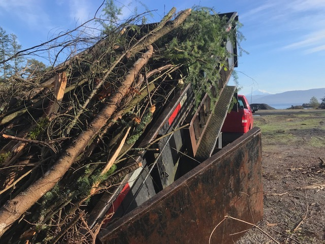 DUmping a load of brush at aiston preserve