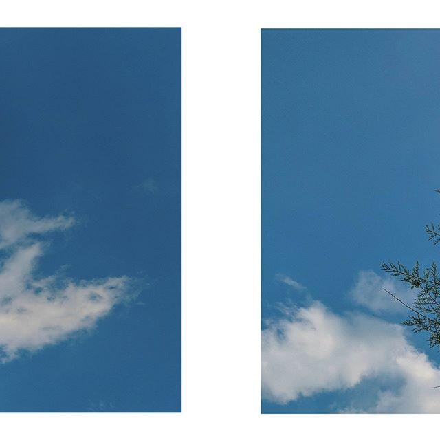 HAPPY MONDAY // // // // // // #trees #bluesky #minimal #minimalphoto #simplicity #natureisalien #whiteclouds #fluffyclouds #simpletree #treelovers #plantlove #plantlovers #naturalbeauty #naturebeauty #naturephotography #naturelover #natureporn #treeporn #treebeauty #smallthings  #natureinspiration #plantbeauty #organicbeauty #planetbeauty #loveourplanet #vsco📸 #vscolike #vscocamgood #moodboard #vzco_mood mood