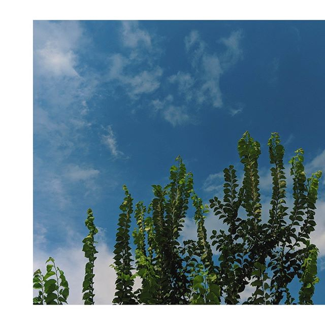 HAPPY TUESDAY // // // // // // #trees #bluesky #minimal #minimalphoto #simplicity #natureisalien #whiteclouds #fluffyclouds #simpletree #treelovers #plantlove #plantlovers #naturalbeauty #naturebeauty #naturephotography #naturelover #natureporn #treeporn #treebeauty #smallthings  #natureinspiration #plantbeauty #organicbeauty #planetbeauty #loveourplanet #vsco📸 #vscolike #vscocamgood #moodboard #vzco_mood mood