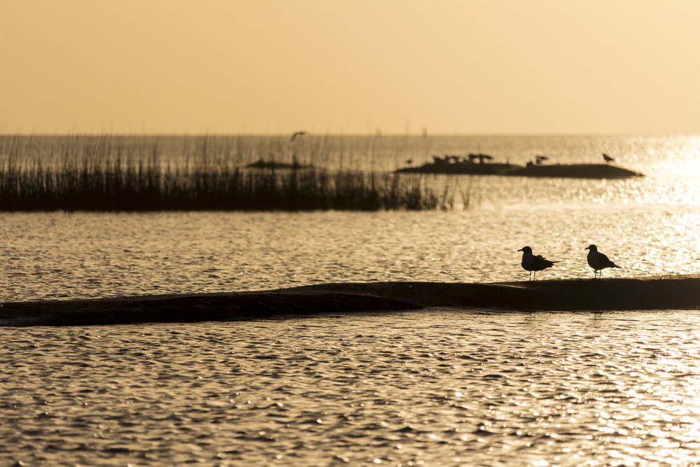 Galveston_4.JPG