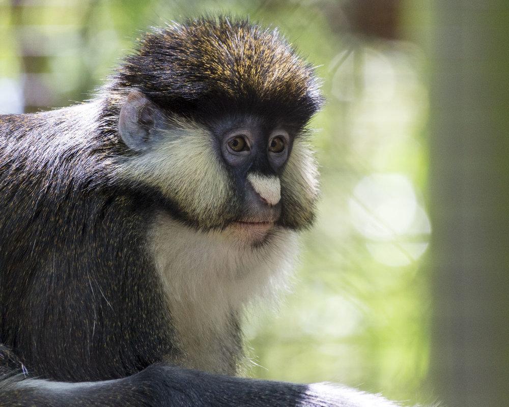 Zoo (8).JPG
