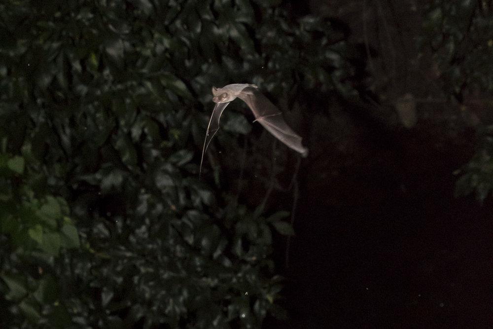 Bats_9.JPG