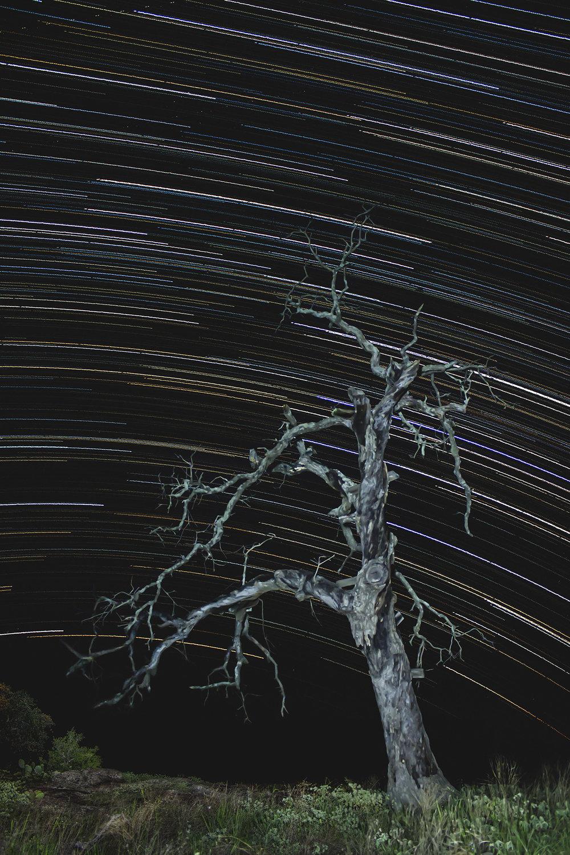 StarTrailsColor.jpg