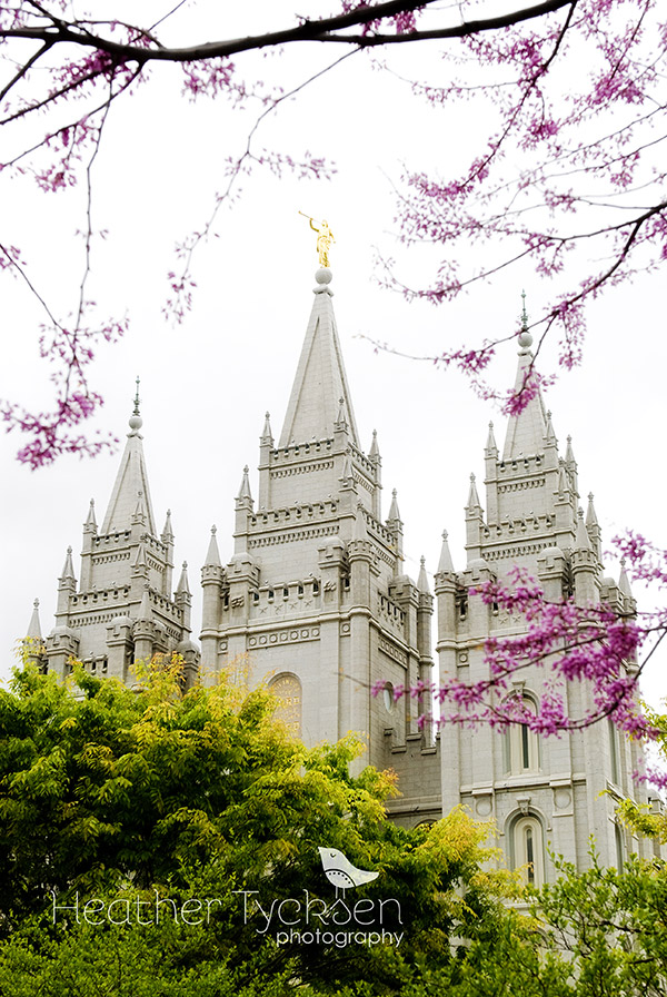 Salt Lake Temple with purple blossoms, Heather Tycksen Photography