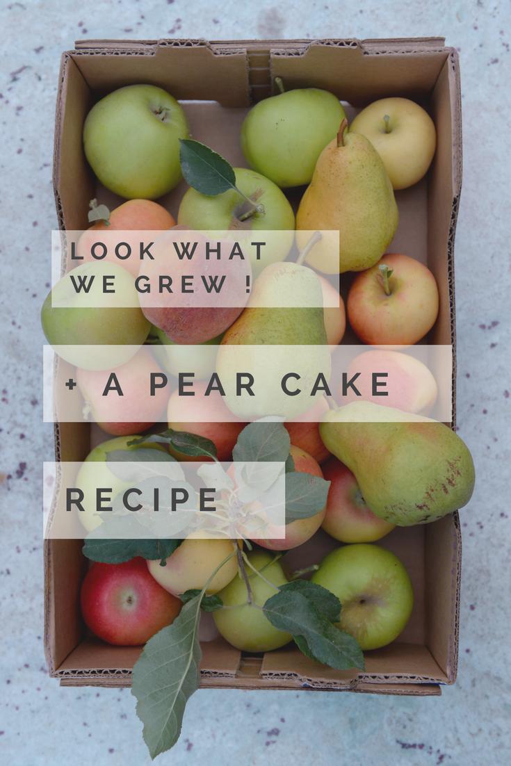 apples-peaches-pears
