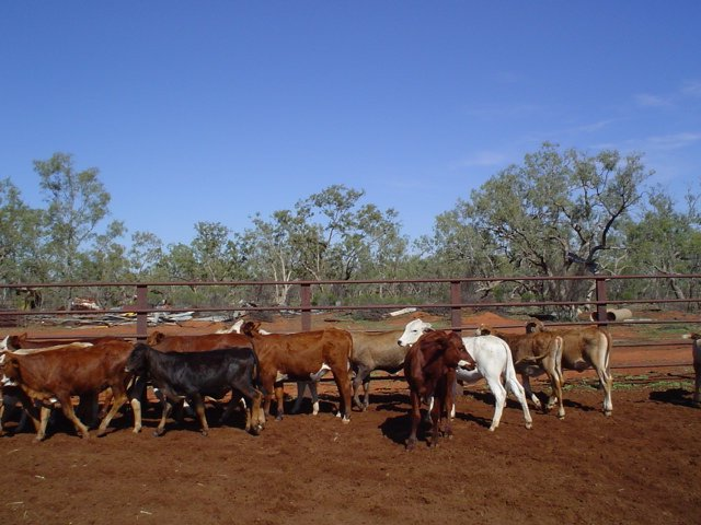 Visit My Farm Australia - Comeroo Station, Bourke NSW