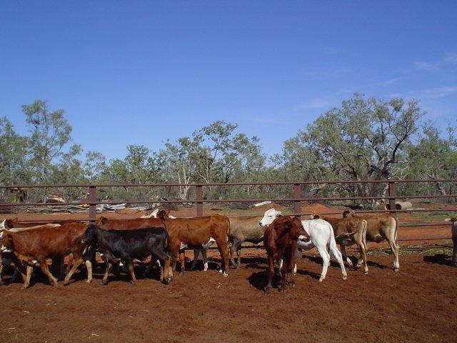Visit My Farm Australia - Comeroo Station, Bourke NSW