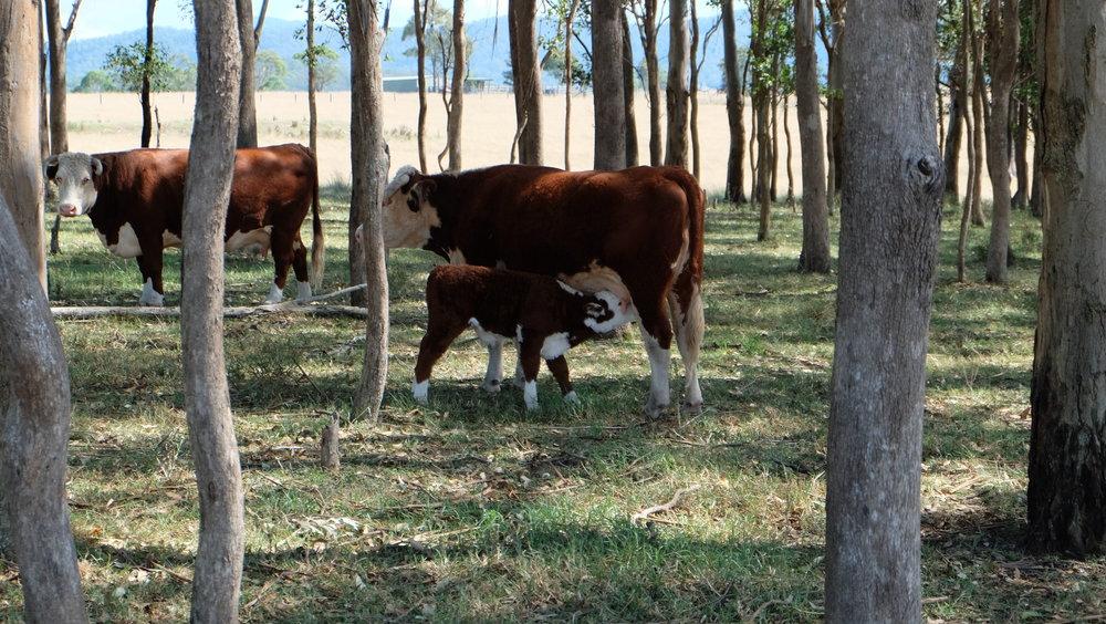 Visit My Farm Australia - Villa Medici, Gloucester NSW