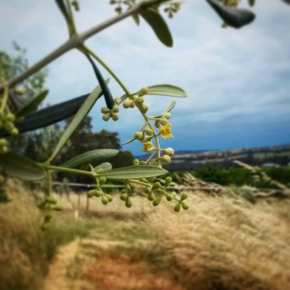 Visit My Farm Australia - Gamilla, Beechworth Victoria