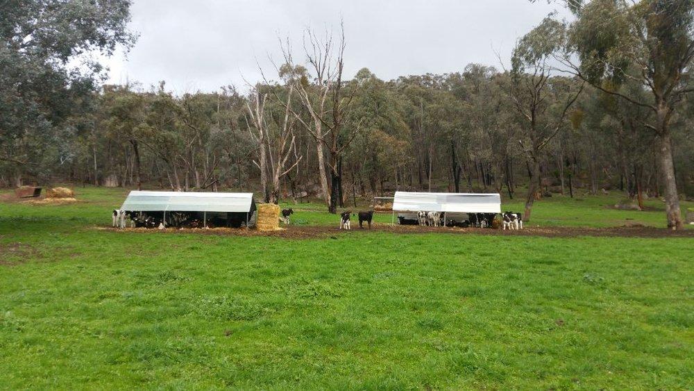 Visit My Farm Australia - Boulder Hill Farm, Mudgegonga VICTORIA
