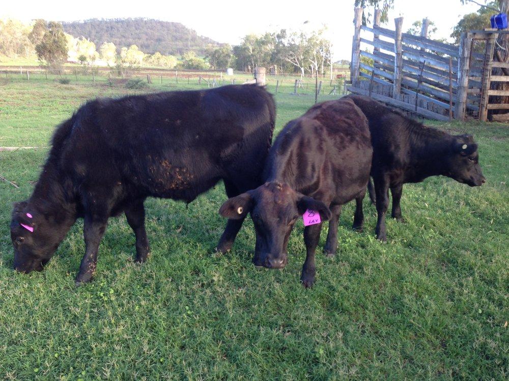 Visit My Farm Australia - J2J Pastoral, Goomburra QLD