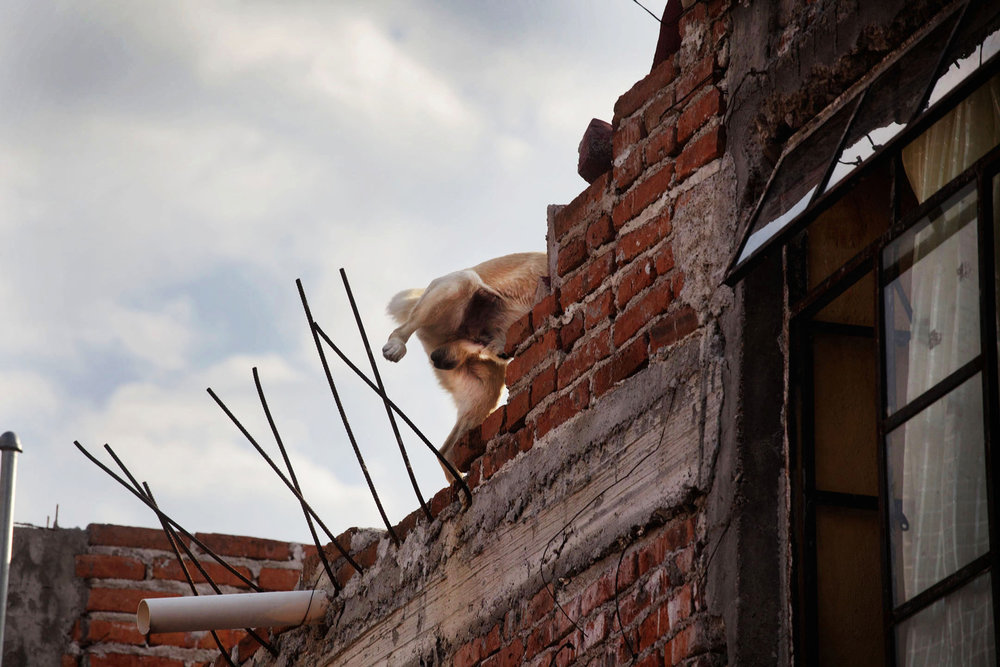 roof dogs-5.jpg