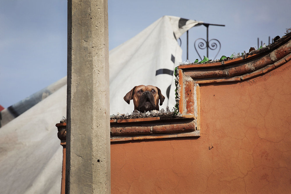 roof dogs-20.jpg
