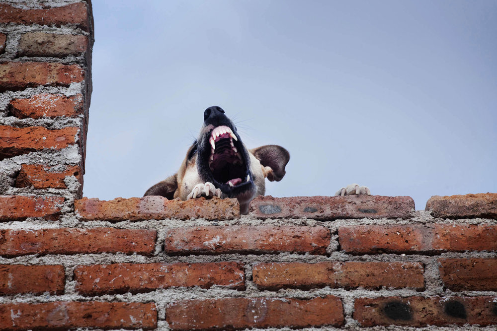 roof dogs-18.jpg