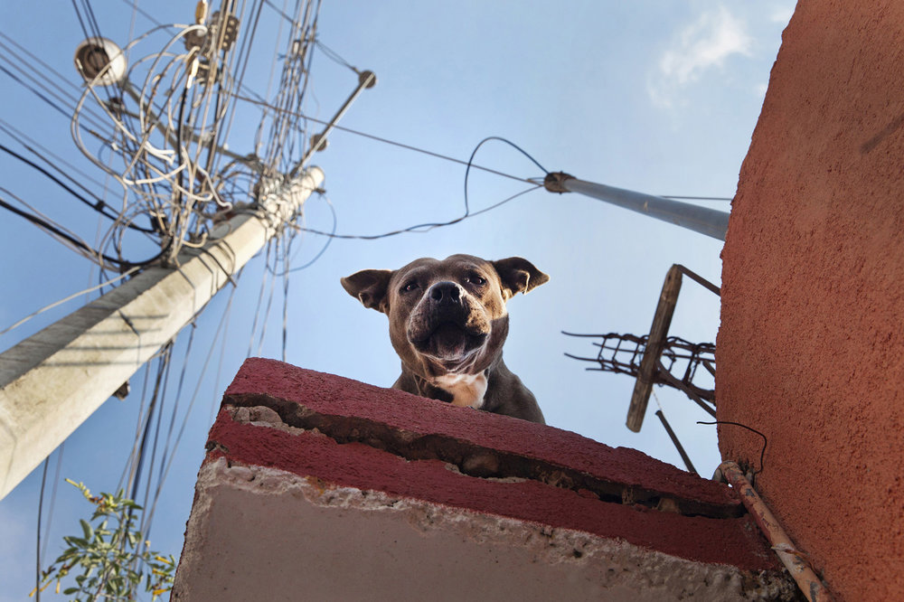 roof dogs-23.jpg