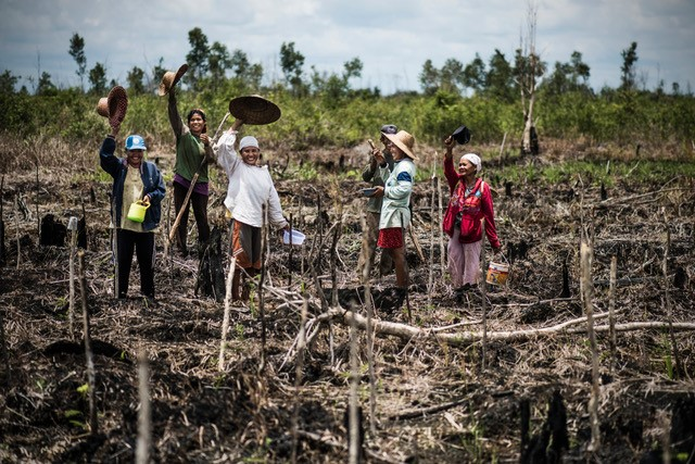 Villagers planting burned land in Central Kalimantan. Photo: Kadir van Lohuizen