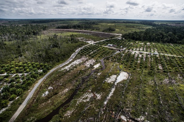 Drained and cleared land in Central Kalimantan, ready for planting with palm oil.  Photo was taken as part of an exhibition on GAMBUT for COP-22. Photo by Kadir van Lohuizen (c).