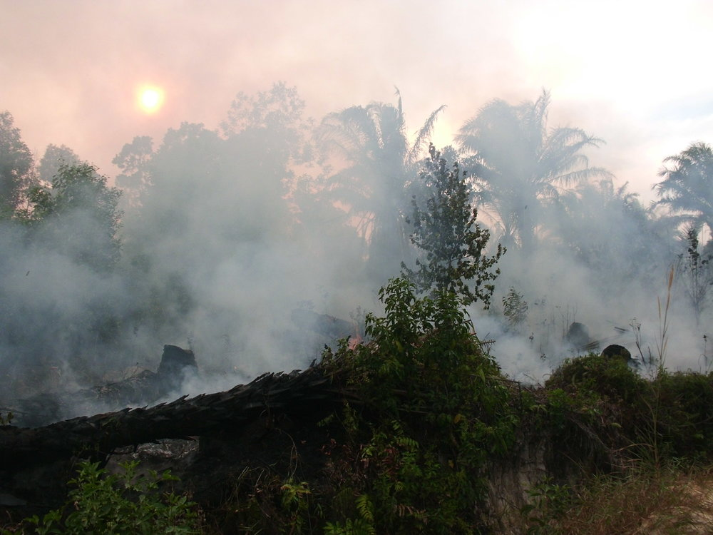Burning peat obscures a setting sun, Dumai district, Riau, September 2016.    Photo by GAMBUT staff Bima Mahendrata.