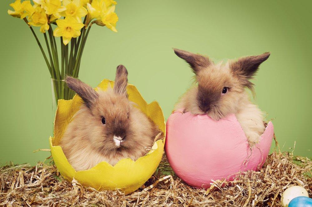 Easter Bunnies 01