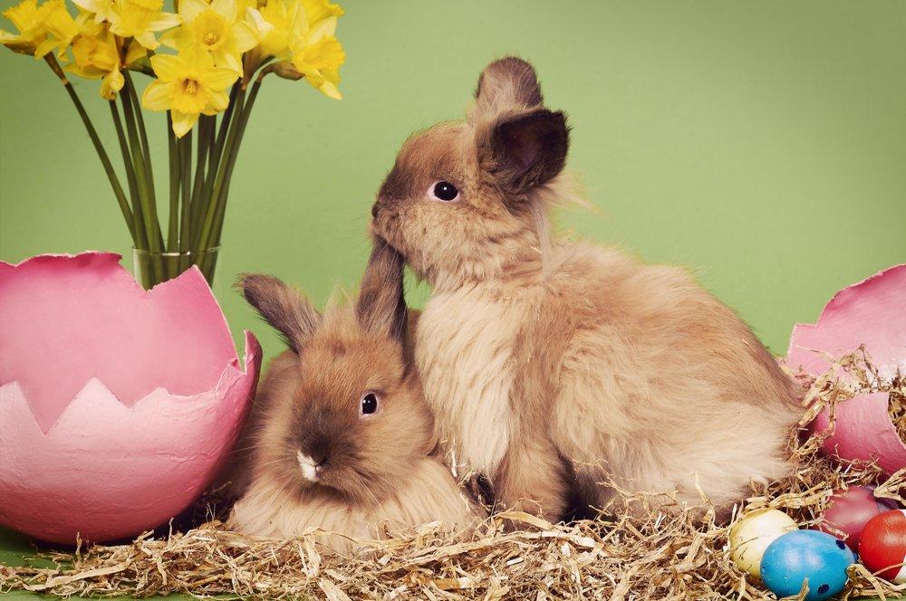 Easter Bunnies 02