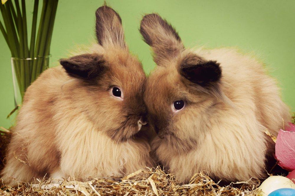 Easter Bunnies 03
