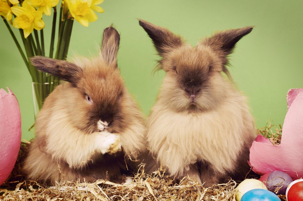 Easter Bunnies 04