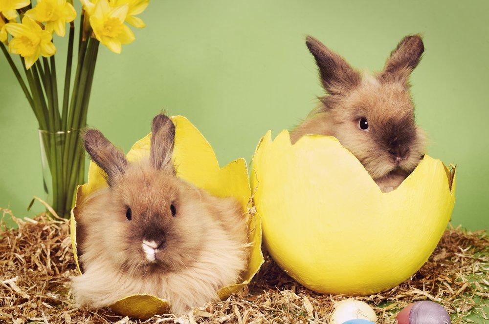 Easter Bunnies 05