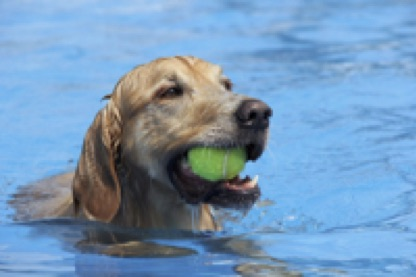 dog in water.jpg