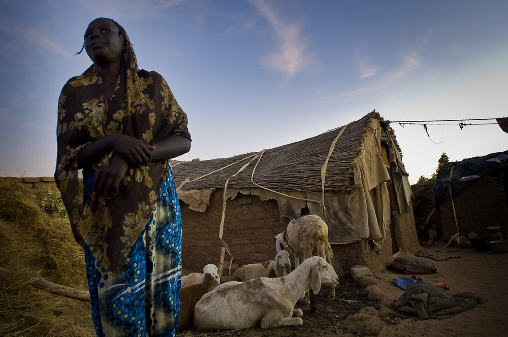 A young woman in her family's compound where she keeps her sheeps. Farchana camp shelter 22 887 persons on 30 september 2011. It is located 56 km away from Sudan and was opened in january 2004.