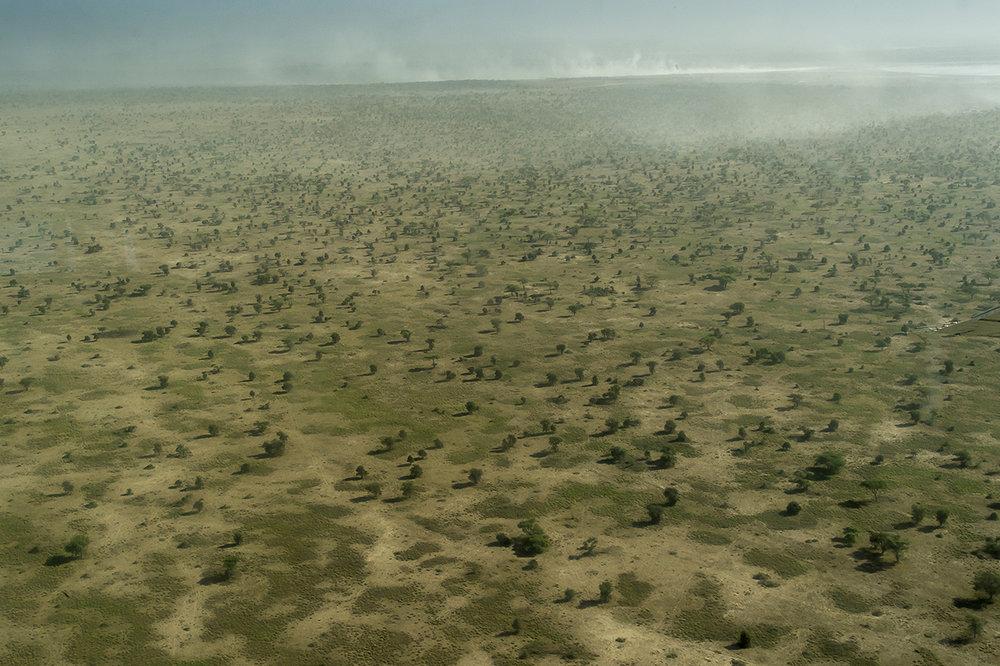 Serengeti04.jpg