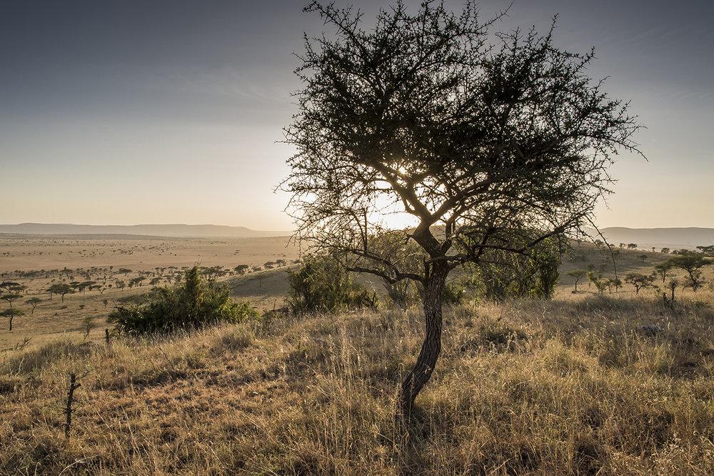 Serengeti07.jpg