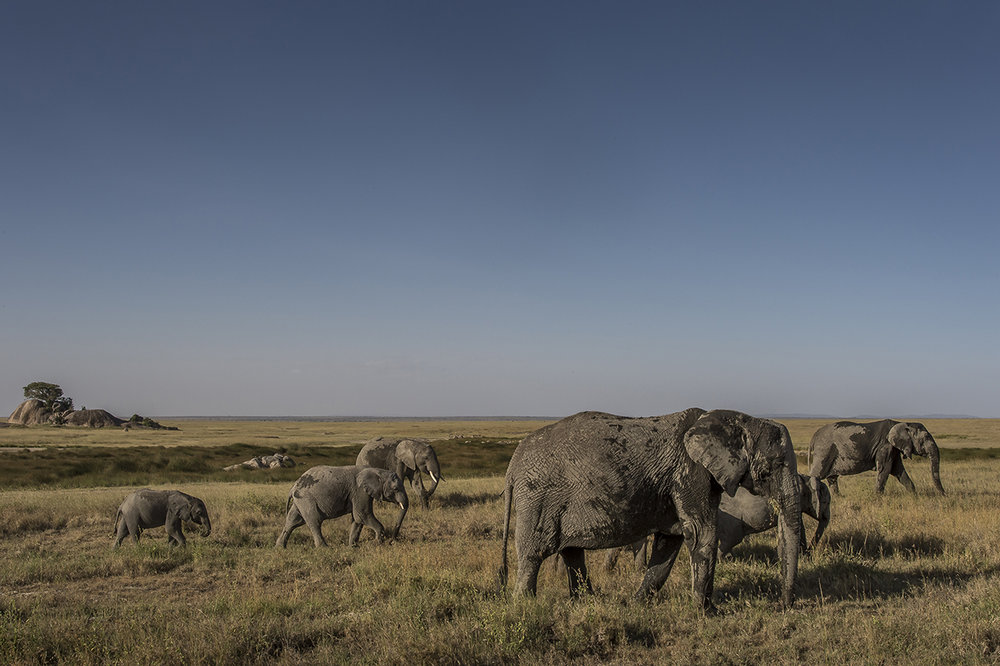 Serengeti09.jpg