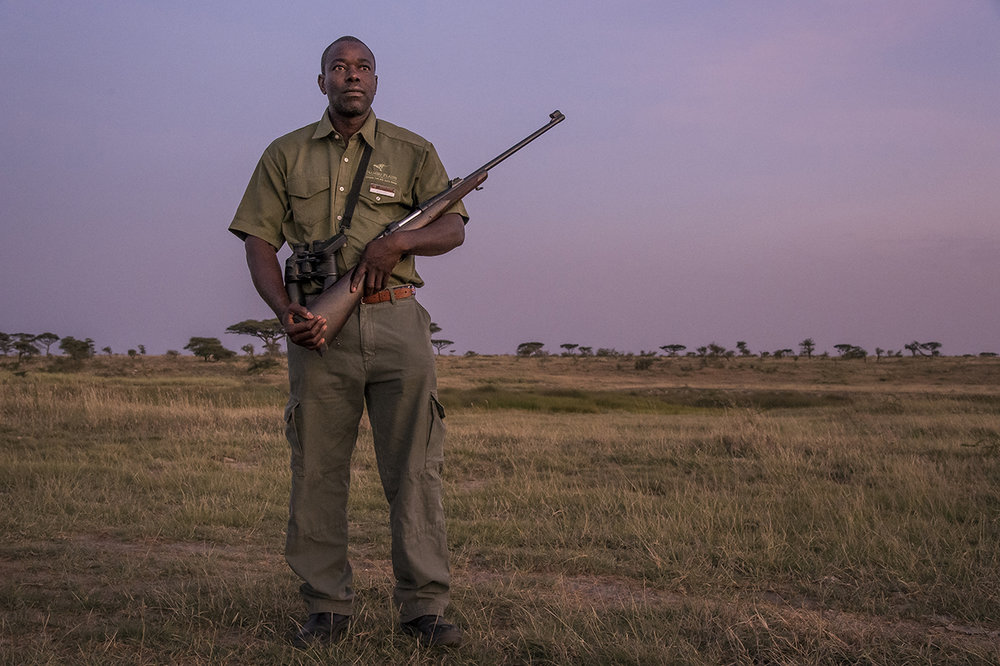 "In the early morning in the eastern part of Serengeti Park. Blessed MPOFU saw many kings come out of thickets: ""Lions often sit in the reeds and wait for the animals that come to drink,"" said the Tanzanian pointing to the bank of the nearby river. He firmly holds his winchester, loaded in .458 caliber cartridges. Reassuring for those who walk off in the Serengeti and who can quickly believe to be lion's food. ""Stay close to me,"" said Ncube, as the sun slid slowly over the pale yellow savanna. To communicate, a sign language dispenses only the indispensable orders: stop, slow down, crouch."