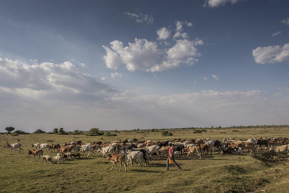 Serengeti25.jpg