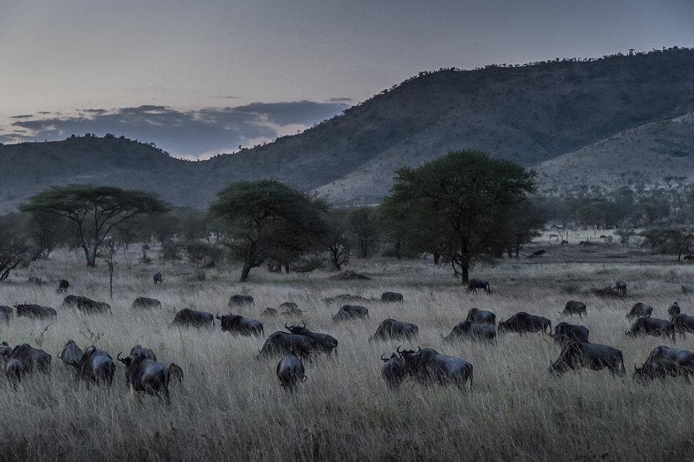 Serengeti27.jpg