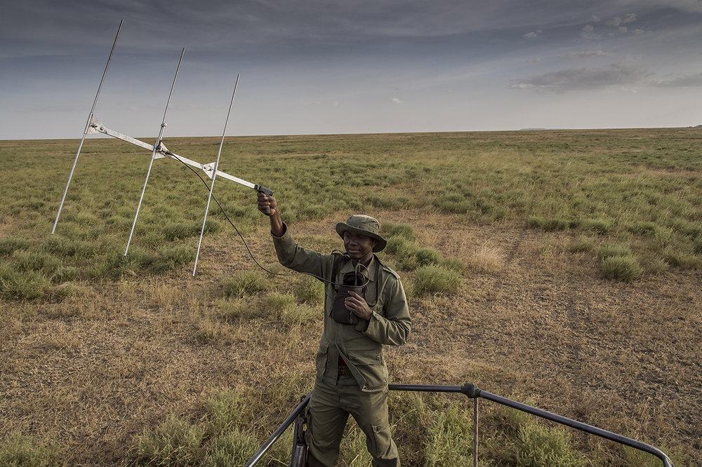 Serengeti30.jpg