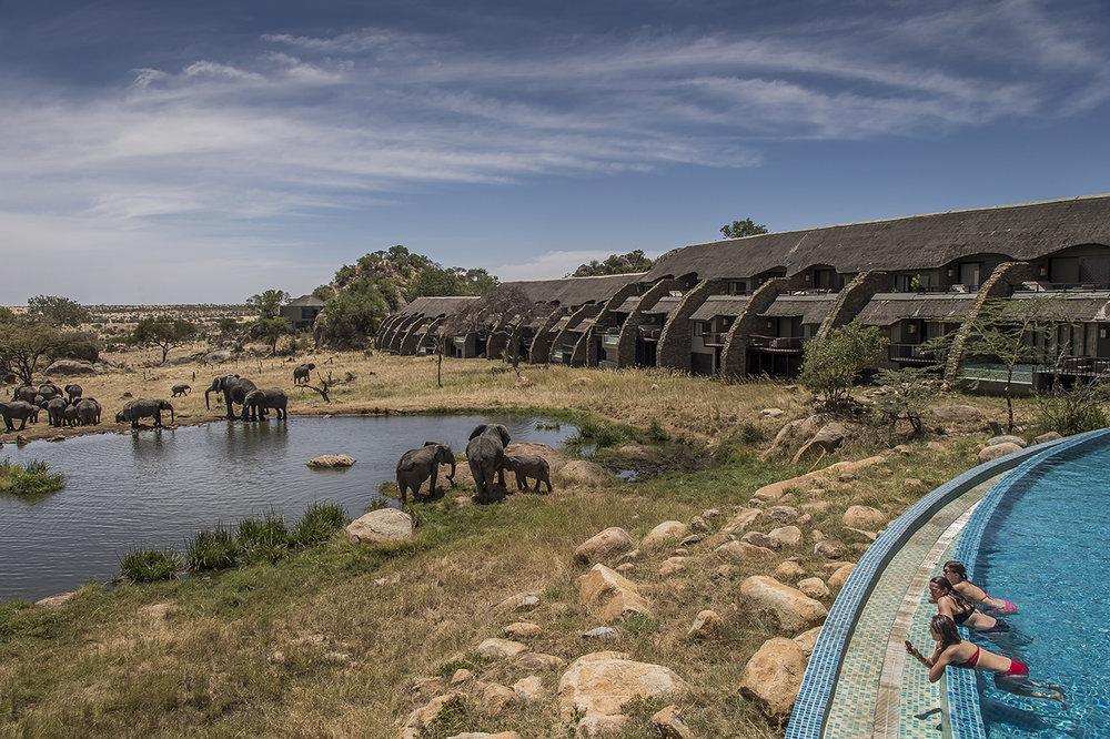 Serengeti39.jpg