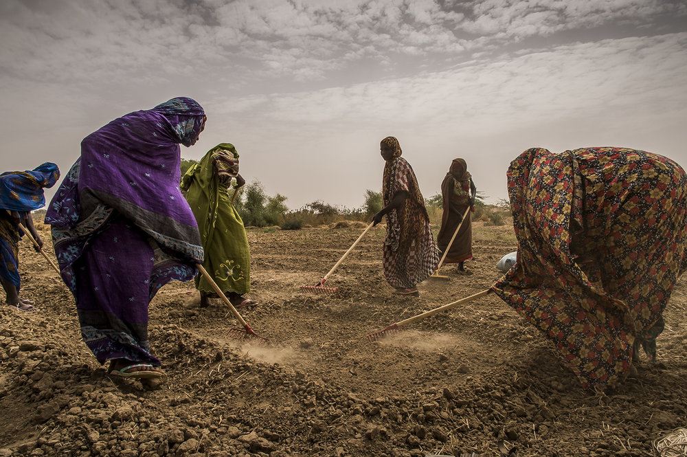 In the village of Amleyouna, Ouara district, Ouaddaï region, some women weed a commun plot, along a wadi (a dry river bed). The plot belongs to a private owner who lends it to the group of female farmers, in return for getting the usufruct. Several tenths of beneficiaries, selected by committees of villages benefit of advises by agricultural technicians paid by an NGO. They repeat the learnt technics in their own plots.