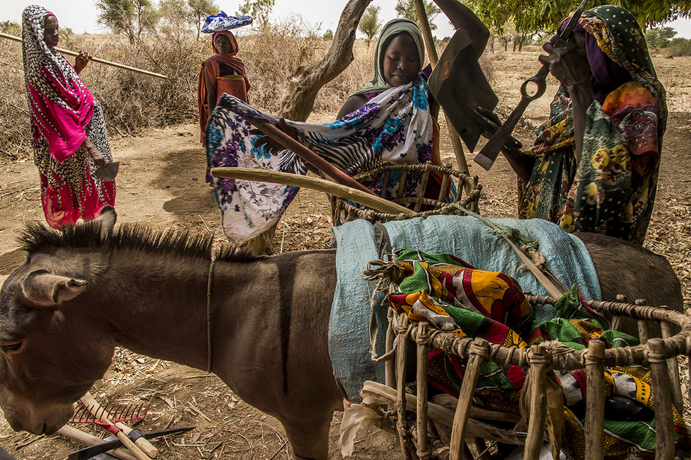 In the village of Amleyouna, Ouara district, Ouaddaï region, two female farmers load a donkey with agricultural inputs (tools, seeds) given by an NGO. More than rewarding regular attendance, these inputs allow beneficiaries of a training program to get the technical means to cultivate their family plots with suitable tool and input. Traditionally, the women are in charge of work in the fields.