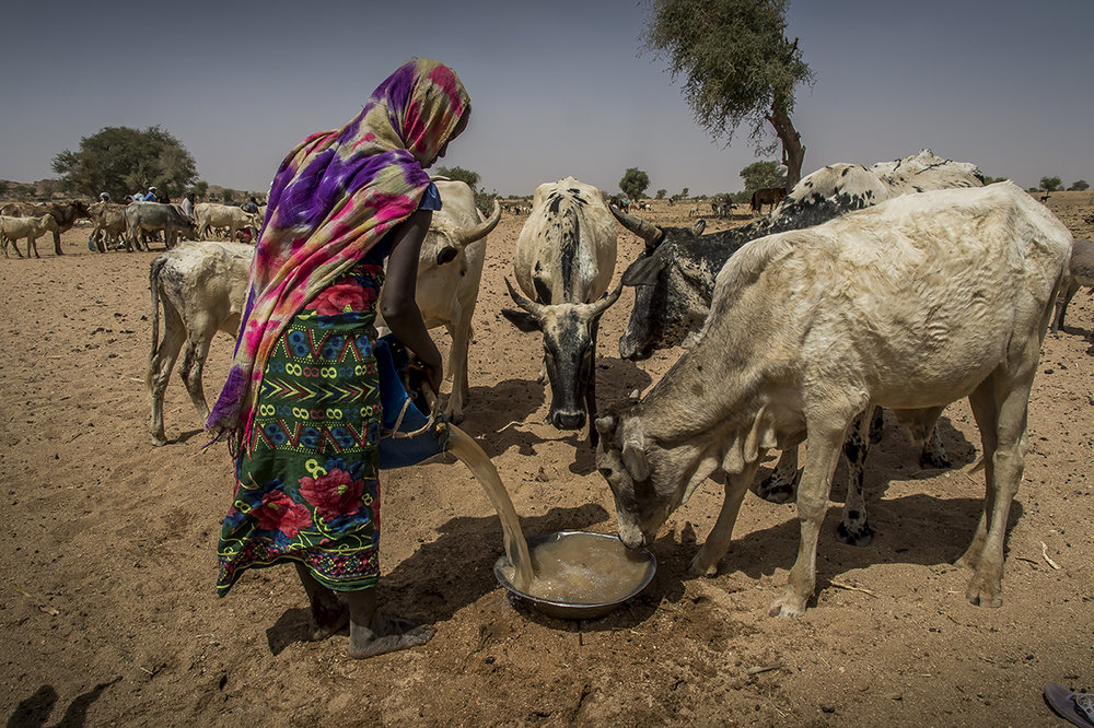 Middle of morning in Hamra (red in chadian arabic) wadi, in Kouchaguine village, Ouara district. A young girl gives water to her cows. The wadi is called so because, during the rainy season, a red mud is carried along by water coming from Sudan, giving an ochre color to the river.