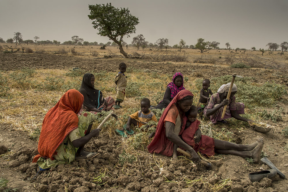 In Nakoulouta village, close to the city of Borota, in Assoungha district, Ouaddaï region, Fatimé Abdu Ibrahim, 17 years old (orange loincloth, right) helps her mother (foreground, right), her two aunts (pink and black loincloth) and a mother's cousin, to harvest onions in a plot rented by the family, next to a wadi. Fatima takes a training in horticulture given by an NGO, hoping that she will train other women herself. She has discovered thanks to the training, soils enrichment, the planting using regular and minimum intervals. She cannot wait to see the result of these technical implementation in the family plots. Indeed, the family rents another plot two hundred meters away. Not yet married, Fatima do not possess her own plot of land. This is her main goal with getting married.