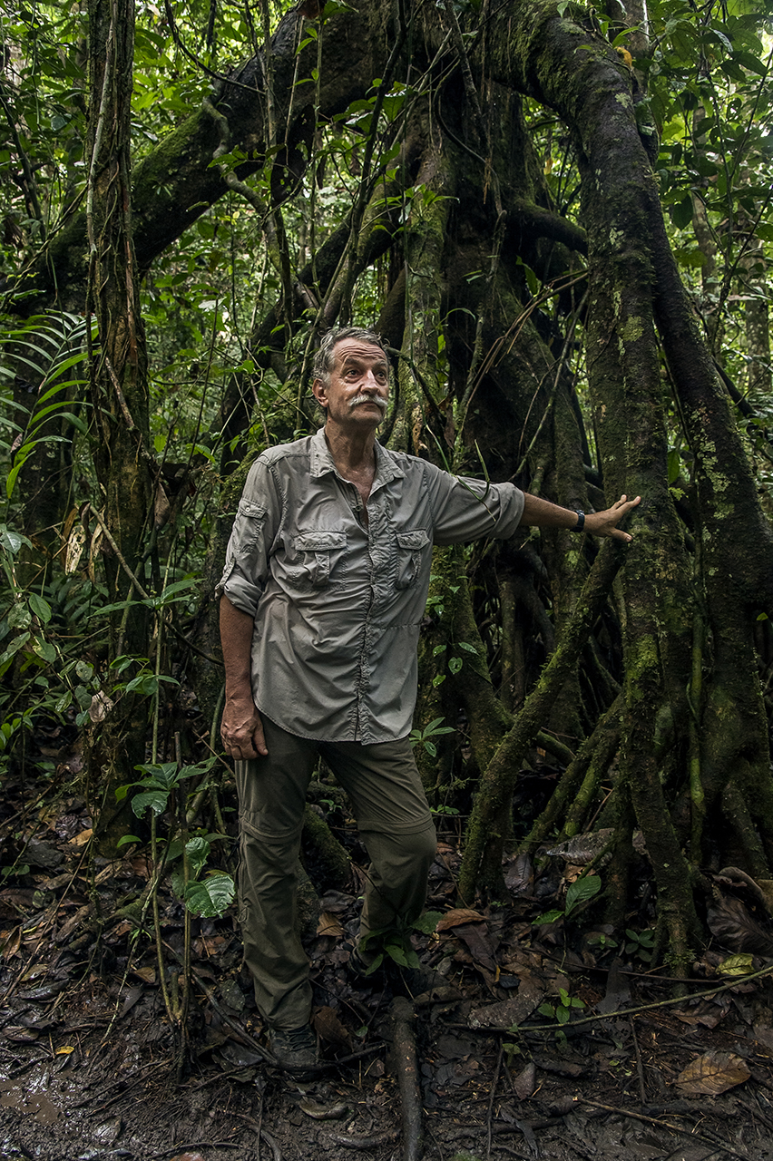 """Christophe Boesch, a Franco-Swiss primatologist, takes a break in the forest of Taï on the way to """"Camp Boyé"""" one of the 2 eco-camp of the National Park of Taï, in Ivory Coast. Since 1997, he is the director of the Department of Primatology at the Max Planck Institute of Evolutionary Anthropology, located in Leipzig, Germany.  Since 1976, Christophe Boesch has been conducting research in the Taï National Park to better understand the behavior and life of chimpanzees in order to put it into perspective with human evolution, especially with regard to the emergence of cognitive and cultural skills.  Boesch is best known for his studies on the use of tools in chimpanzees through which he analyzes their social behavior and the processes of social and cultural reproduction; it also analyzes the hunting and territorial behavior of chimpanzees.  In 2000, Christophe Boesch founded the Wild Chimpanzee Foundation (WCF), which aims to protect wild chimpanzees."""