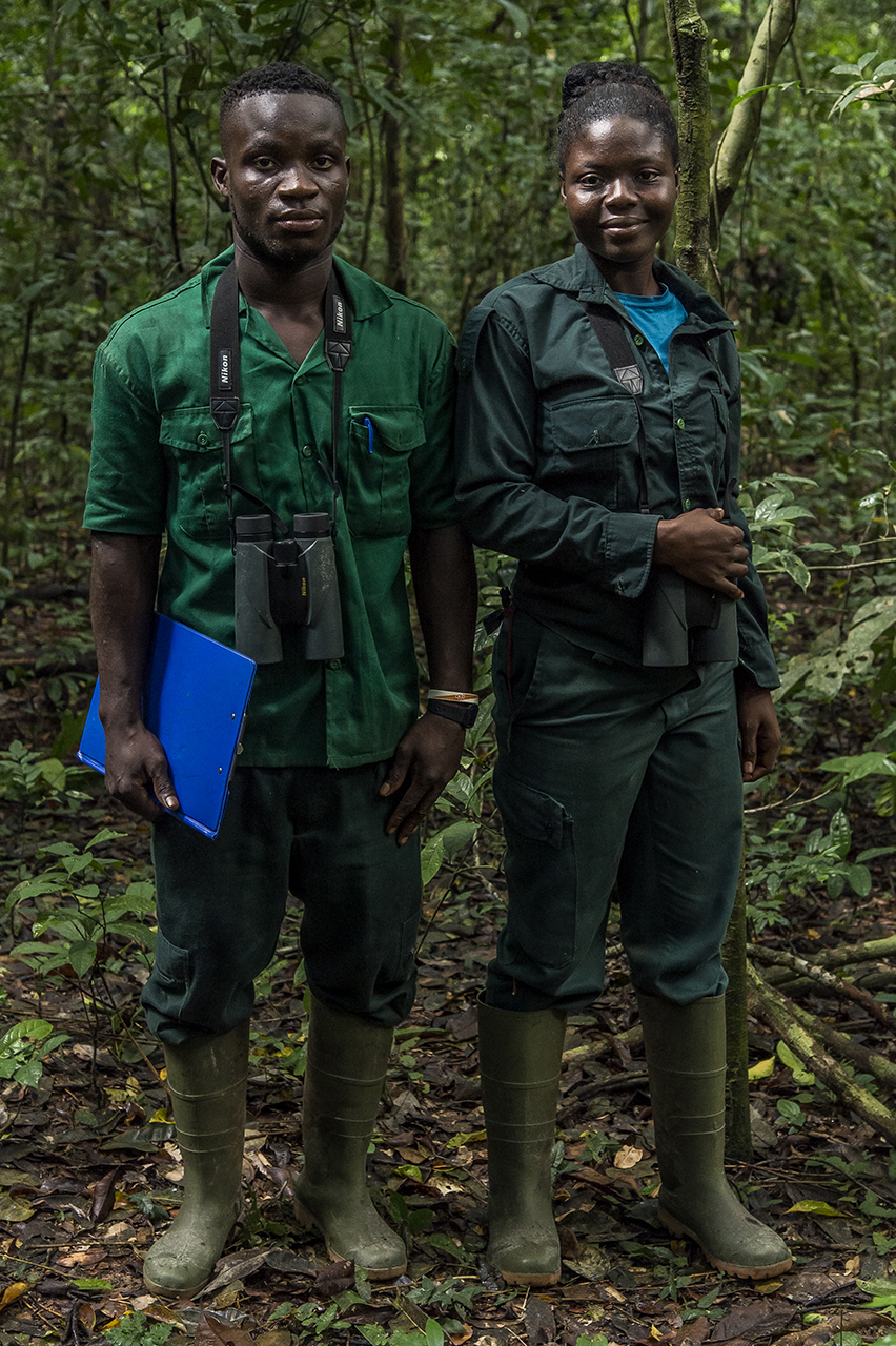 Two eco-guides of the Wild Chimpanzee Foundation (WCF) in the Tai tropical forest, in Tai National Park. They are responsible for the observation, location and census of chimpanzees.