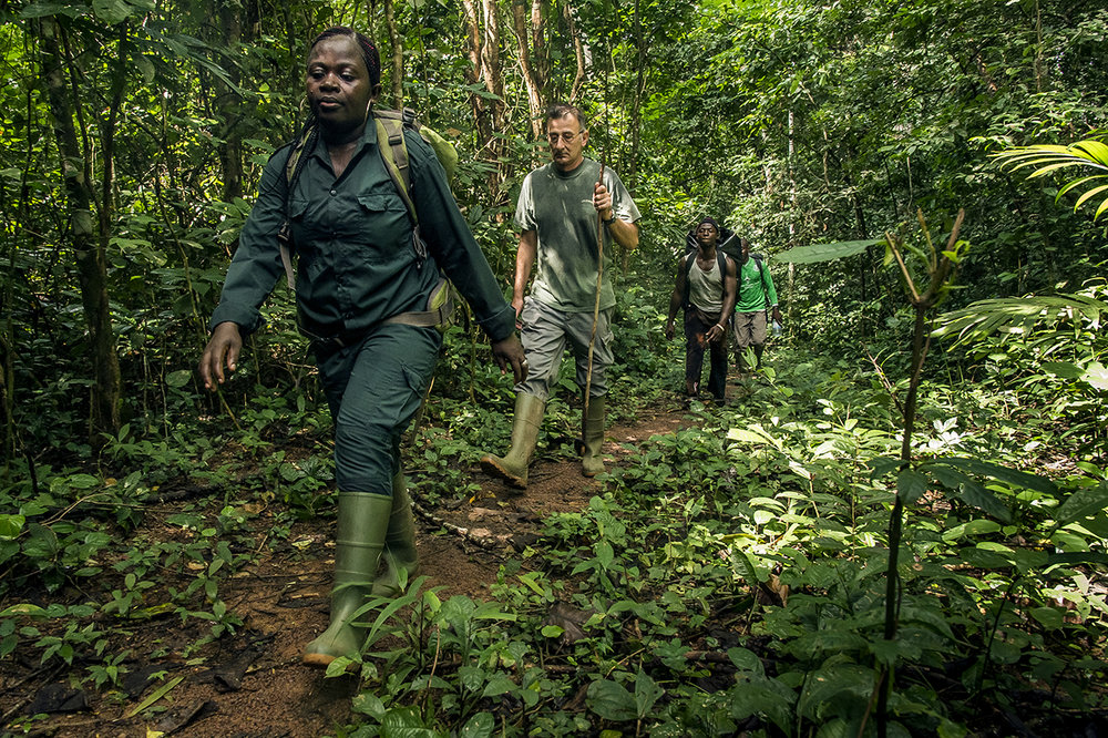 """A group composed by an eco-guide, Thierry Fabien, coordinator for all activities of the Wild Chimpanzee Foundation (WCF) in Taï and porters walking in the forest of Taï, en route to """"Camp Boyé"""", a camp located in the heart of the rainforest."""