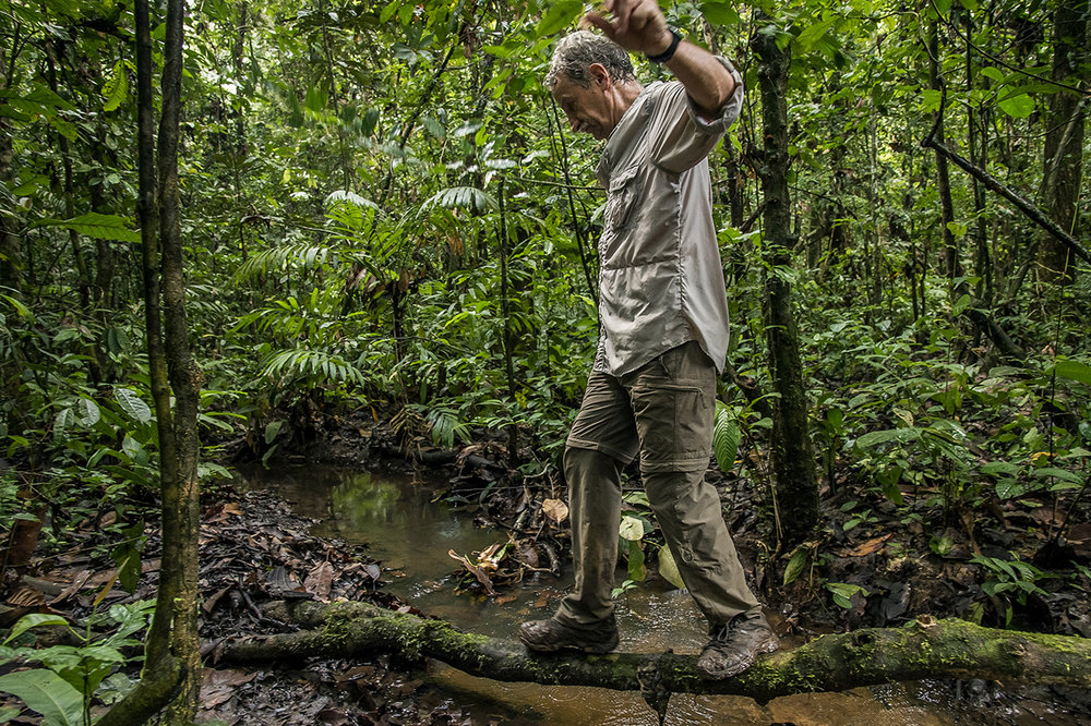 """Christophe Boesch, primatologist, crosses a small river in the forest of Taï on the way of """"Camp Boyé"""" one of the 2 eco-camp of the National Park of Taï, in Ivory Coast. It rained recently. The trails are muddy and regularly cut by small springs and ponds."""