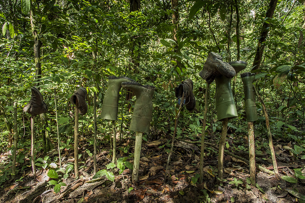 """At the entrance of """"Camp Boyé"""", an eco-camp of the Wild Chimpanzee Foundation (WCF) in the middle of the tropical forest of Taï, the eco-guides let their boots dry, head down to prevent any insect or snake to nest inside. To avoid contamination from the forest to the camp and vice versa, pediluvium are installed at each entrance to the camp. Any guest is required to soak his boots in, put them to dry at the entrance and move around the camp with other shoes. When he leaves for the forest, he will execute the opposite operation."""